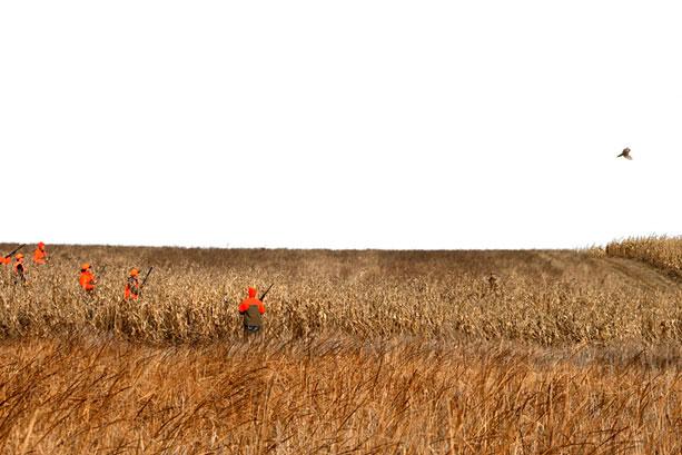 Tumbleweed Habitat Program