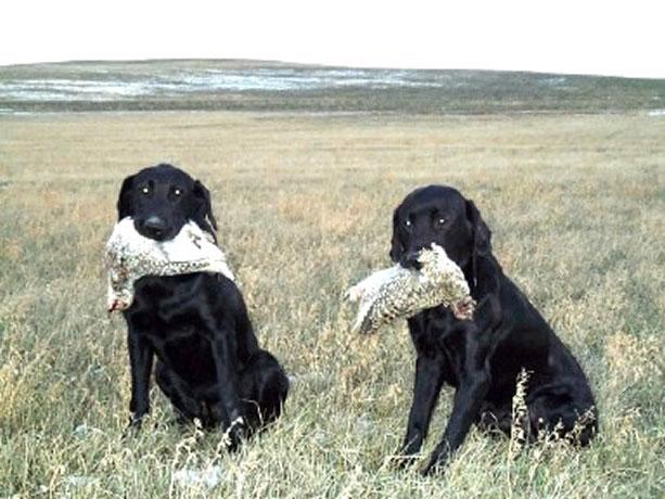 Tumbleweed's Retrievers & Kennel