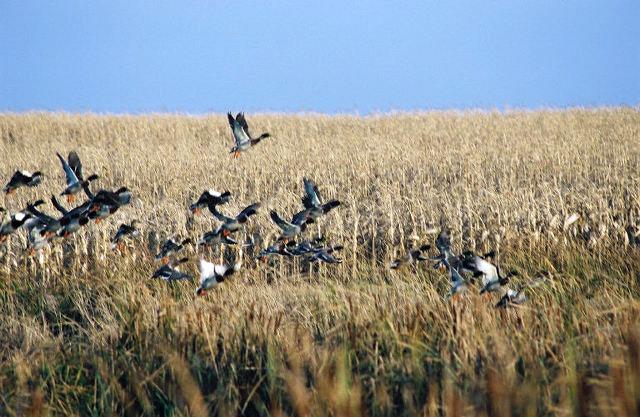 Waterfowl Hunting at Tumbleweed Lodge